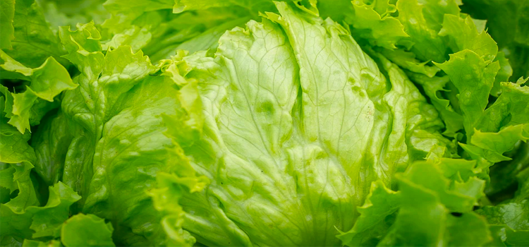 Q 2. WHAT VEGETABLE IS THIS?