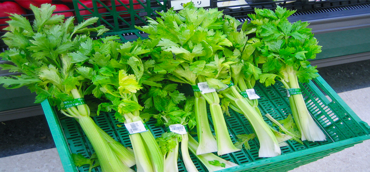 Q 13. WHAT VEGETABLE IS THIS?
