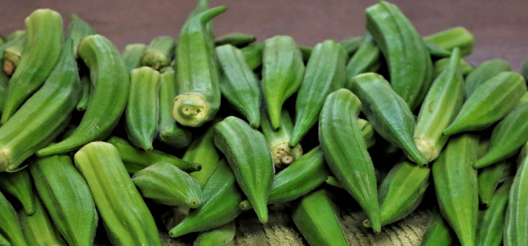 Q 15. WHAT VEGETABLE IS THIS?