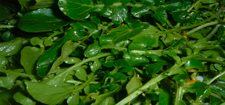 Q 19. WHAT VEGETABLE IS THIS?