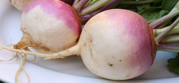 Q 21. WHAT VEGETABLE IS THIS?