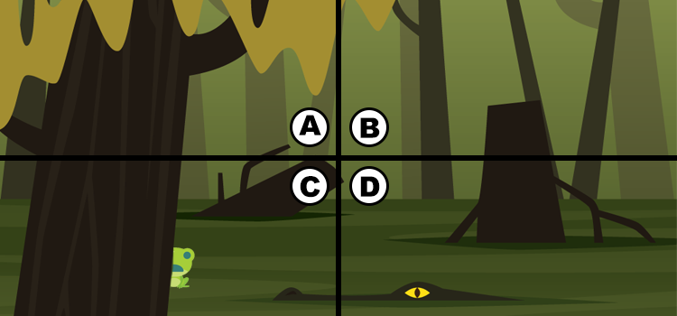 Q 2. CAN YOU SPOT THE FROG?